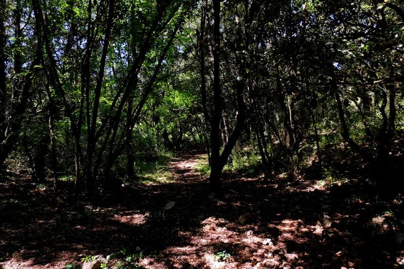 Randonnée à Peillon dans la forêt