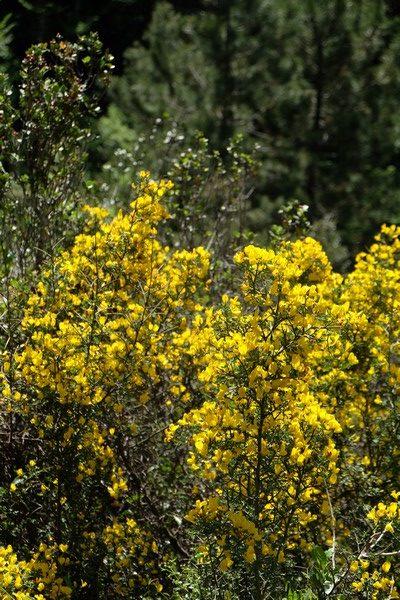 Végétation méditerranéenne peillon