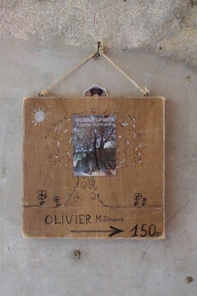 Olivier millénaire à Roquebrune-Cap-Martin