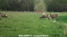 Iubind_natura (9) (Copy)