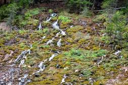 Cascada Urlatoarea (3)