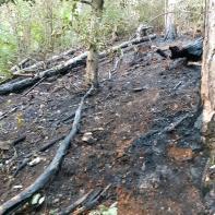 Foc in Schei (2)
