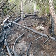 Foc in Schei (3)