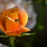 Cui ne adresăm pentru a scăpa de viespi sau albine