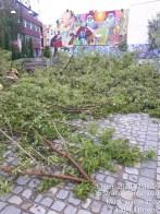 curatenie arbori (2)