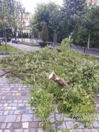 curatenie arbori (4)