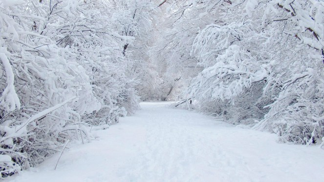 4438178-snow-wallpapers