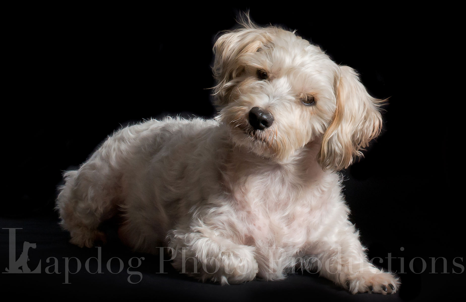 Pet Portrait Photography London