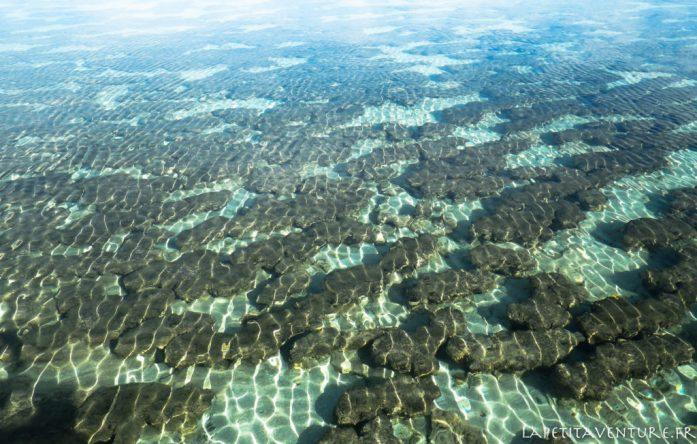 hamelin bay en Australie