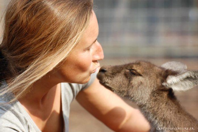 un jeune kangourour