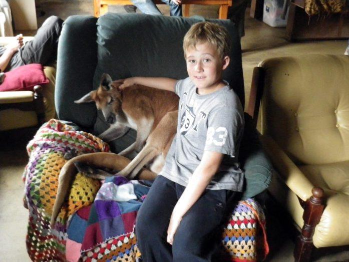 Le kangourou Max