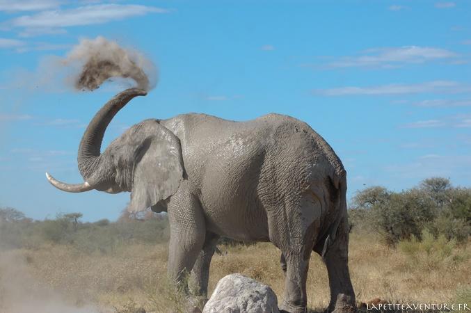 éléphant au pan de nxai
