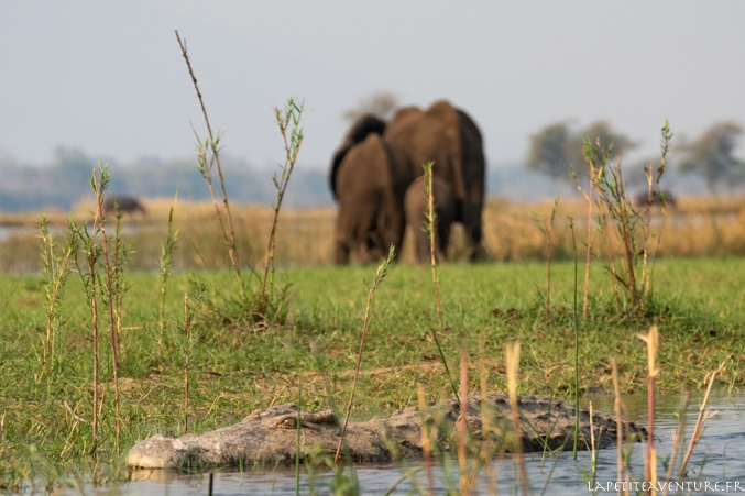 crocodile au zimbabwe