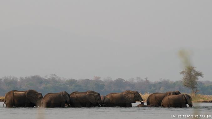 éléphants du Zambèze