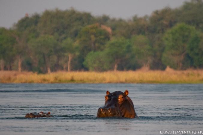faune du zambèze