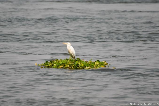 Petite île du zambèze