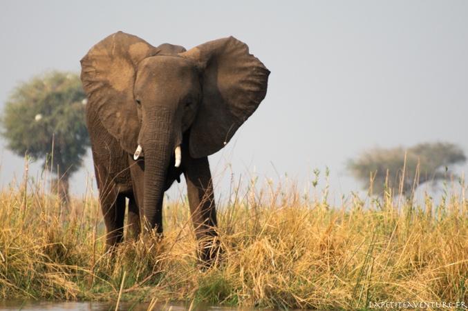 éléphant et zambèze