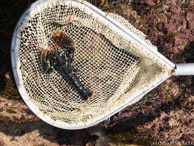 homard à la pêche à la crevette