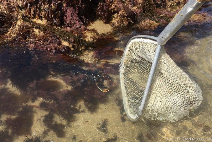 homard dans l'épuisette
