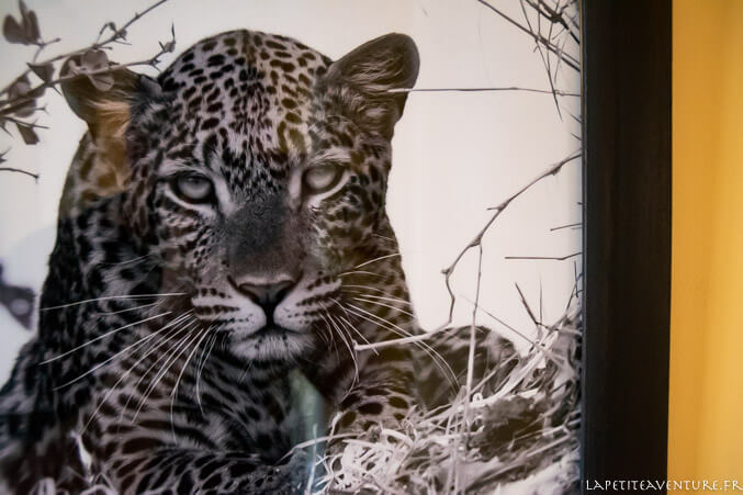 Photo de léopard