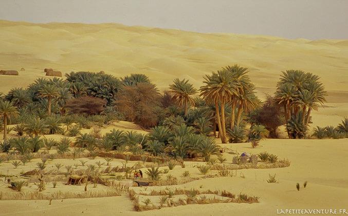 Oasis en Mauritanie