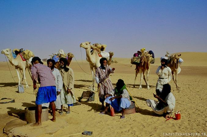 Chameaux en Mauritanie