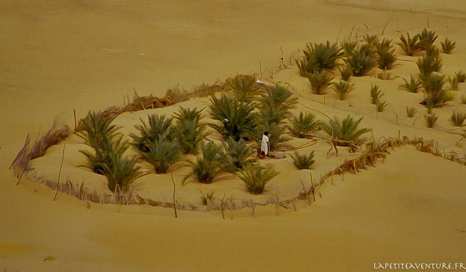 Jardin dans le désert en Mauritanie