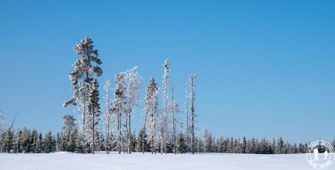 Paysage enneigé en Laponie suédoise