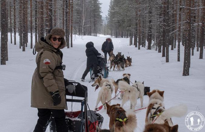 En chiens de traineaux dans la forêt