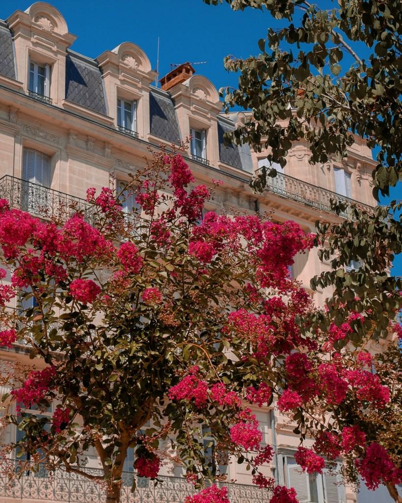 Journée découverte Béziers - La Petite Frenchie