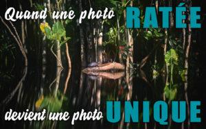 Quand une photo ratée devient une photo unique - Apprendre la photo avec le blog La Photo clic par clic