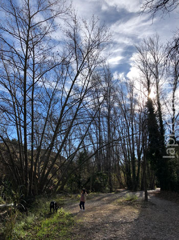 pinada que encontramos en la ruta
