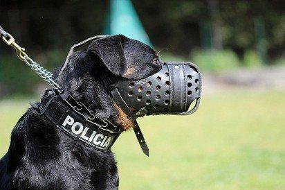 Ротвейлер все о собаке фото описание породы характер цена