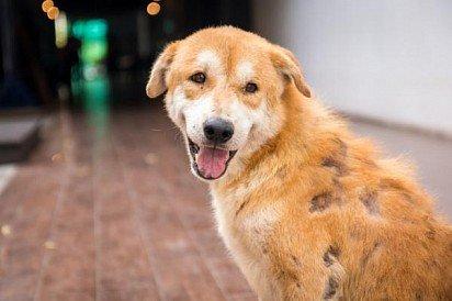 Лишай у собак – фото, признаки, симптомы и лечение