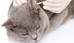 Как чистить уши котенку в домашних условиях