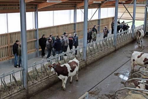 Visite du bâtiment des vaches laitières