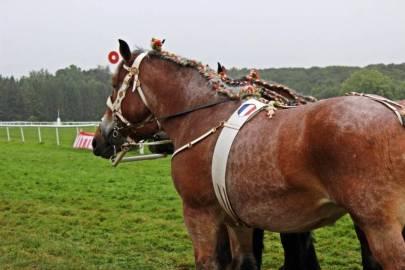 concours-ardennai-Vittel (12)