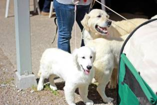 expo-canine-vittel (10)
