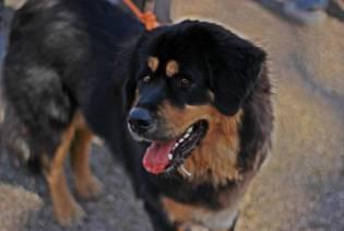 expo-canine-vittel (3)