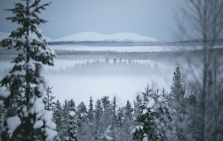 Landscape of Lapland forest