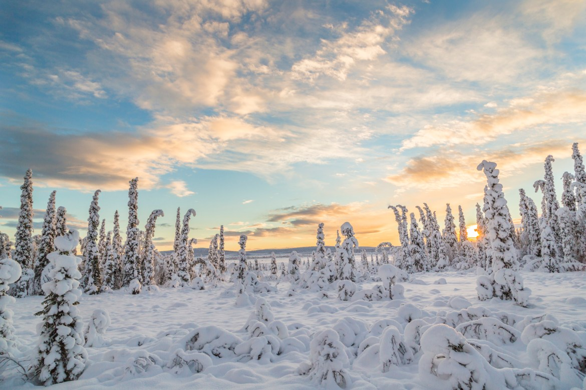 Warm-winter-afternoon-Swedish-Lapland