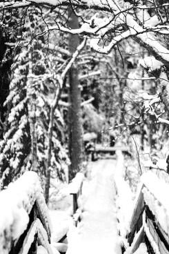 snowed wooden walking way