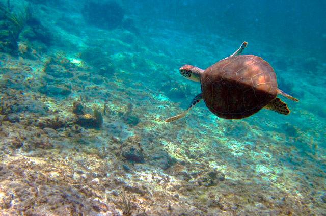 playas en riviera maya 3
