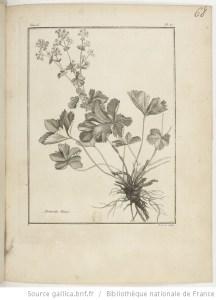 Achemilla, in Traité des Plantes de la Lorraine / par P. J. Buchoz (1731-1807)