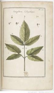 Titre : Élémens de botanique, ou Méthode pour connoître les plantes, par M. Pitton Tournefort,.... III. [Pl. 235-451.] Auteur : Tournefort, Joseph Pitton de (1656-1708). Auteur du texte Éditeur : Impr. royale (Paris)