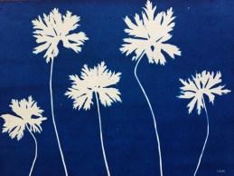 Géranium 'Johnson's Blue', feuilles (Geraniaceae) cyanotype, 24x32cm ©GLSG