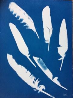Plumes, cyanotype, 24x32cm ©GLSG