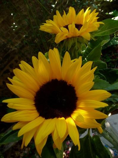 Soleil... à consommer sans modération, quand le ciel est gris...