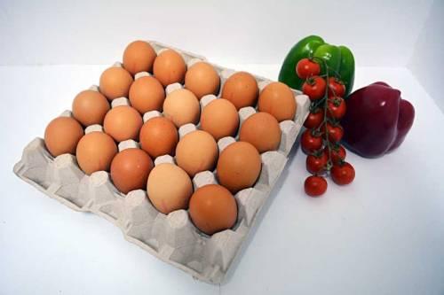 Cartón de huevos XXL