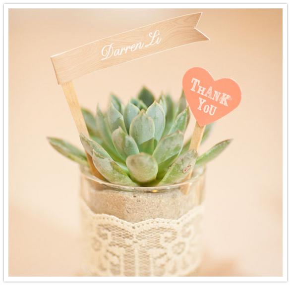 Cadeaux d'invités succulentes